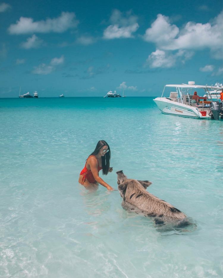 The Bahamas, Where Pigs Swim