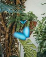 Butterfly1-2