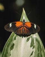 Butterfly1-4