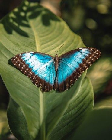 Butterfly1-6
