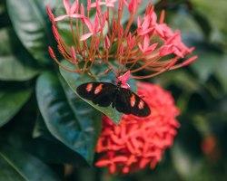 Butterfly1-7